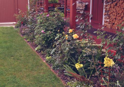 миксбордер из садовых роз