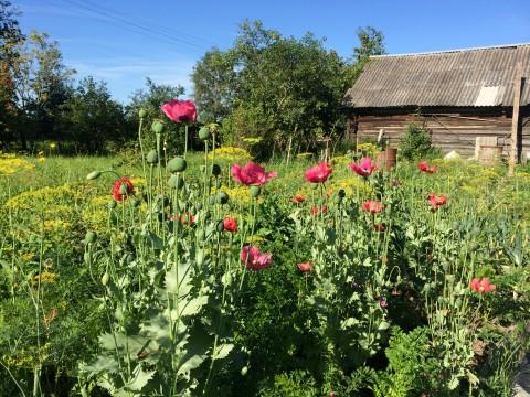 привлекаем полезных насекомых в сад