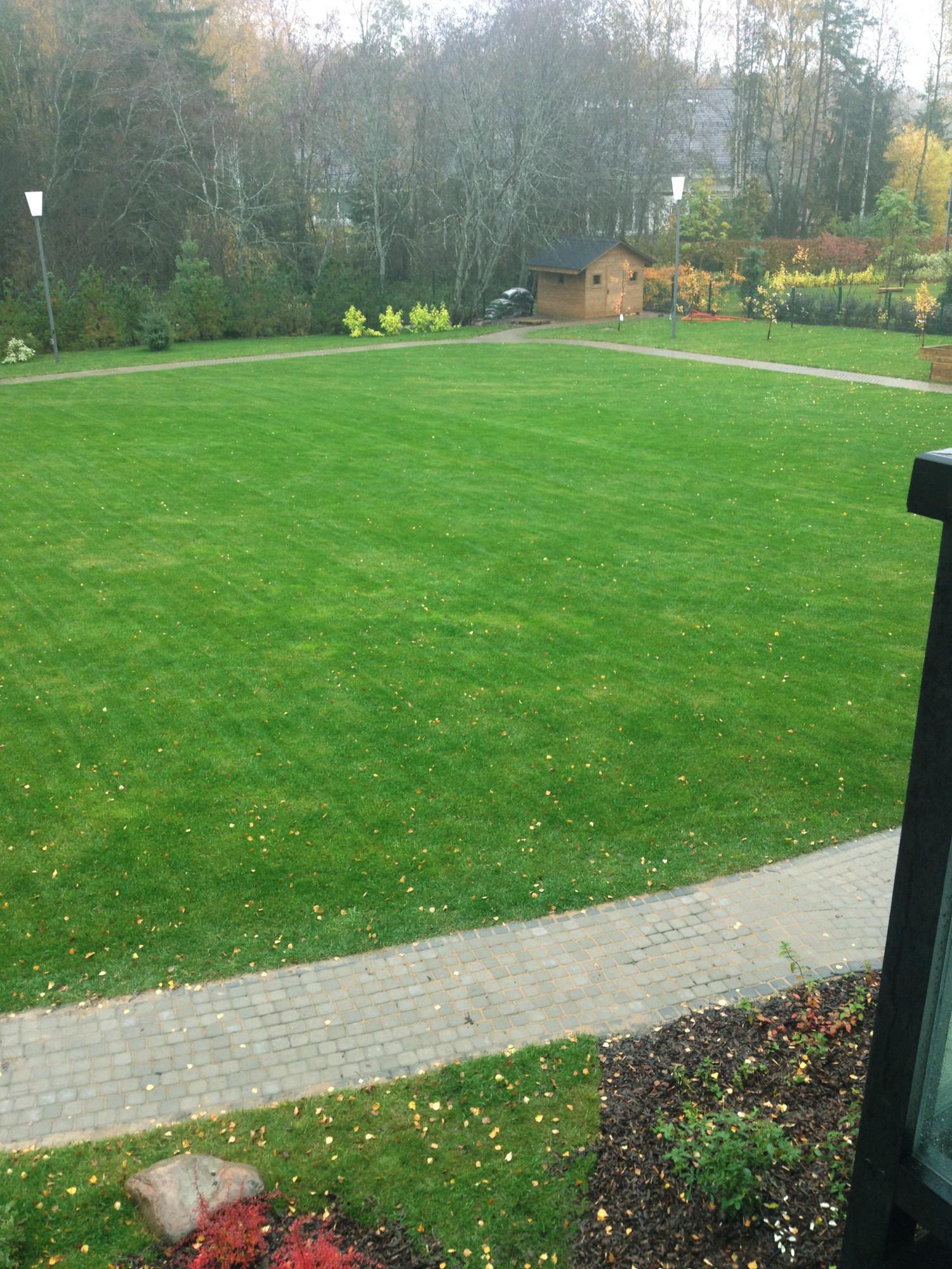 устройство газона больших площадей