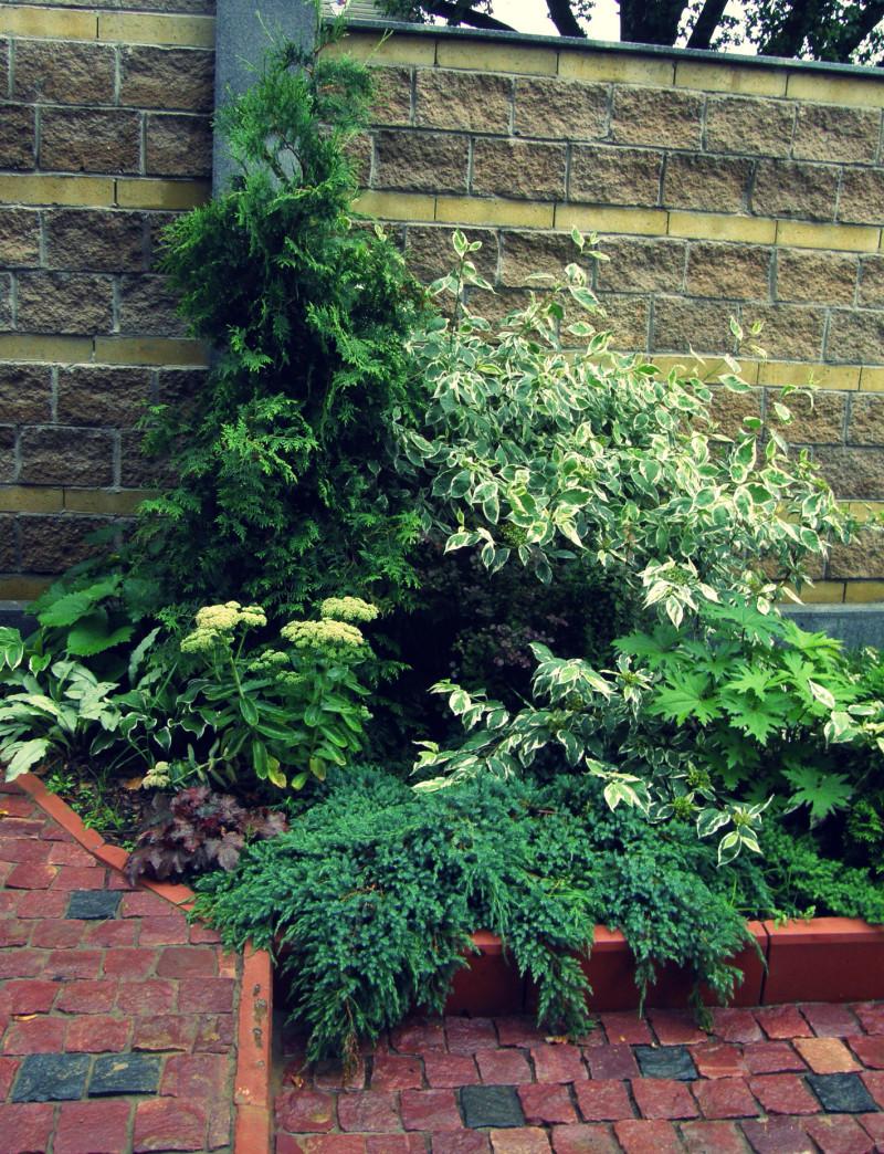 озеленение входной зоны