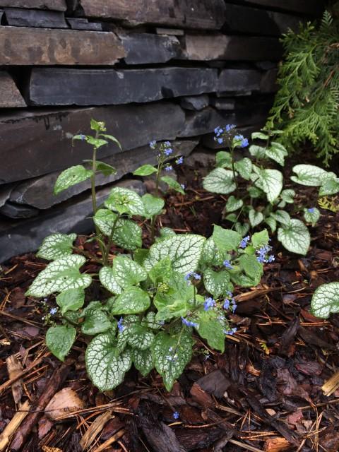 декоративные растения в сад